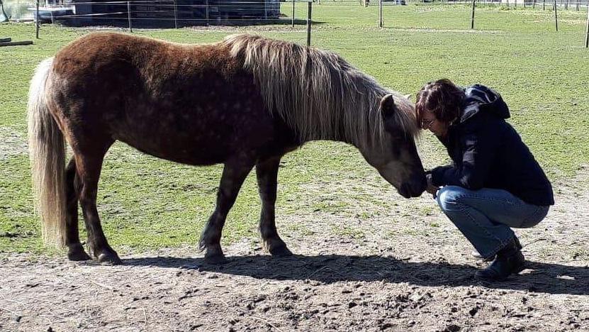 paardencoaching HSP hoogsensitief